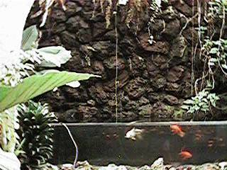 Tropical Fish Tank