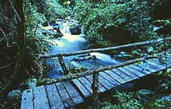 A rustic bridge over a woodland stream
